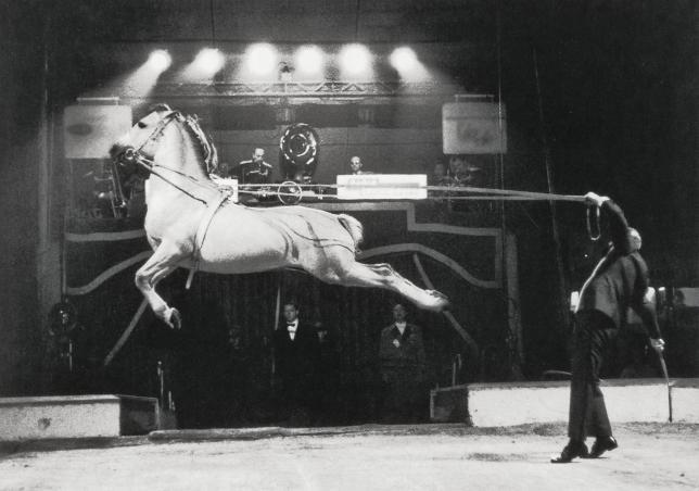 Le cirque, chapiteaux des arts équestres