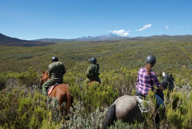 Kenya, des chevaux au service de l'éléphant