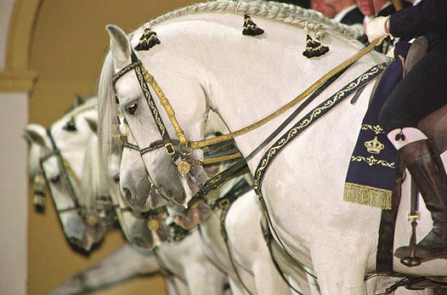 À Jerez, dansent aussi les chevaux