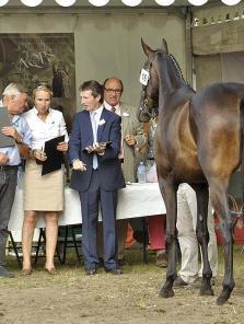 Les AQPS Du cheval de guerre aux courses d'obstacles