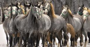 """Lucien Gruss : """"Pour être un homme de cheval, il faut se donner tort"""""""